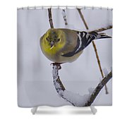 Yellow Finch Cold Snow Shower Curtain