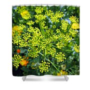 Yellow Firework Or Dill In Its Glory Shower Curtain