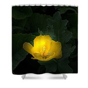 Yellow Flower Against Green Shower Curtain