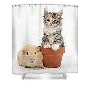 Yellow Guinea Pig And Kitten Shower Curtain