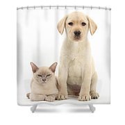 Yellow Lab And Burmese Cat Shower Curtain