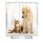 Yellow Lab And Ginger Kitten Shower Curtain