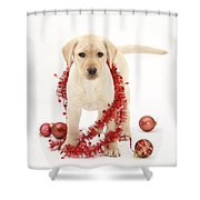 Yellow Lab Pup At Christmas Shower Curtain
