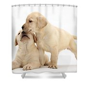 Yellow Lab Puppies Shower Curtain