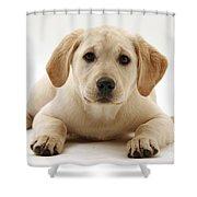 Yellow Lab Puppy Shower Curtain
