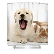Yellow Lab Puppy With Rabbit Shower Curtain