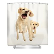 Yellow Labrador Pups Leaping And Running Shower Curtain