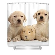 Yellow Labrador Retriever Pups Shower Curtain