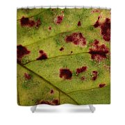Yellow Leaf With Red Spots 2 Shower Curtain