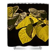 Yellow Leaves On A Tree Branch Shower Curtain