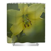 Yellow Lily Flower Shower Curtain