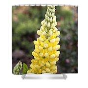 Yellow Lupine Shower Curtain