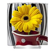 Yellow Mum In Pitcher  Shower Curtain