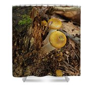 Yellow Mushrooms Shower Curtain