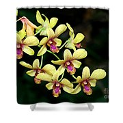 Yellow Orchid Cascade Shower Curtain