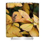Yellow Petal Leaf With Sprig Shower Curtain