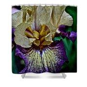 Yellow  Purple Iris Shower Curtain