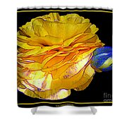 Yellow Ranunculus Flower With Blue Colored Edges Effect Shower Curtain