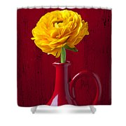 Yellow Ranunculus In Red Pitcher Shower Curtain