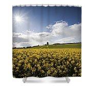 Yellow Rapeseed Field, Newgrange Shower Curtain