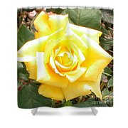 Yellow Rose At High Noon Shower Curtain by Alys Caviness-Gober