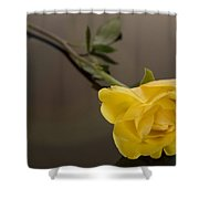 Yellow Rose Of Friendship Shower Curtain