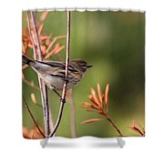 Yellow-rumped Warbler - Peaceful Pastels Shower Curtain