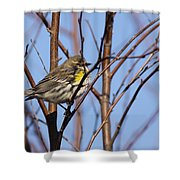 Yellow-rumped Warbler - Placid Shower Curtain