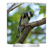 Yellow Rumped Warbler Looking Down Shower Curtain