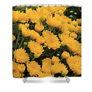 Yellow Sea Of Flowers Shower Curtain