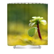 Yellow Sedum Shower Curtain