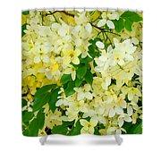 Yellow Shower Tree - 1 Shower Curtain