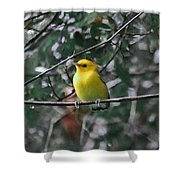 Yellow Songbird Shower Curtain