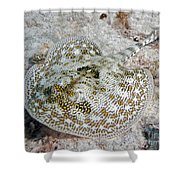 Yellow Stingray In Caribbean Sea Shower Curtain