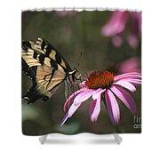 Yellow Swallowtail And Purple Coneflower Shower Curtain
