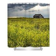 Yellow Sweet Clover Melilotus Shower Curtain