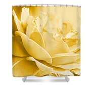 Yellow Tone Rose  Shower Curtain