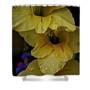 Yellow Trio Shower Curtain by Susan Herber