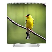 Yellow Tux Shower Curtain