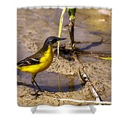 Yellow Wagtail Shower Curtain