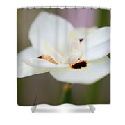 Yellow Wild Iris Shower Curtain