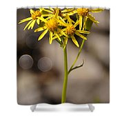 Yellow Wildflower At Crater Lake Shower Curtain