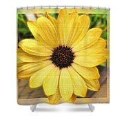 Yellow Wow Shower Curtain