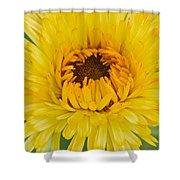 Yellow Zinnia 9494 4286 Shower Curtain
