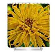 Yellow Zinnia_9480_4272 Shower Curtain