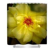 Yellowrose Shower Curtain