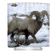 Yellowstone Big Horn Sheep Shower Curtain