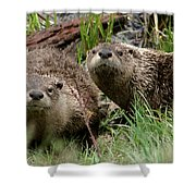 Yellowstone River Otters Shower Curtain