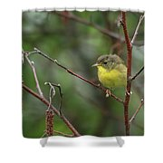Yellowthroated Warbler Shower Curtain