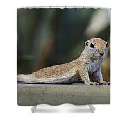 Yoga Ground Squirrel Style Shower Curtain